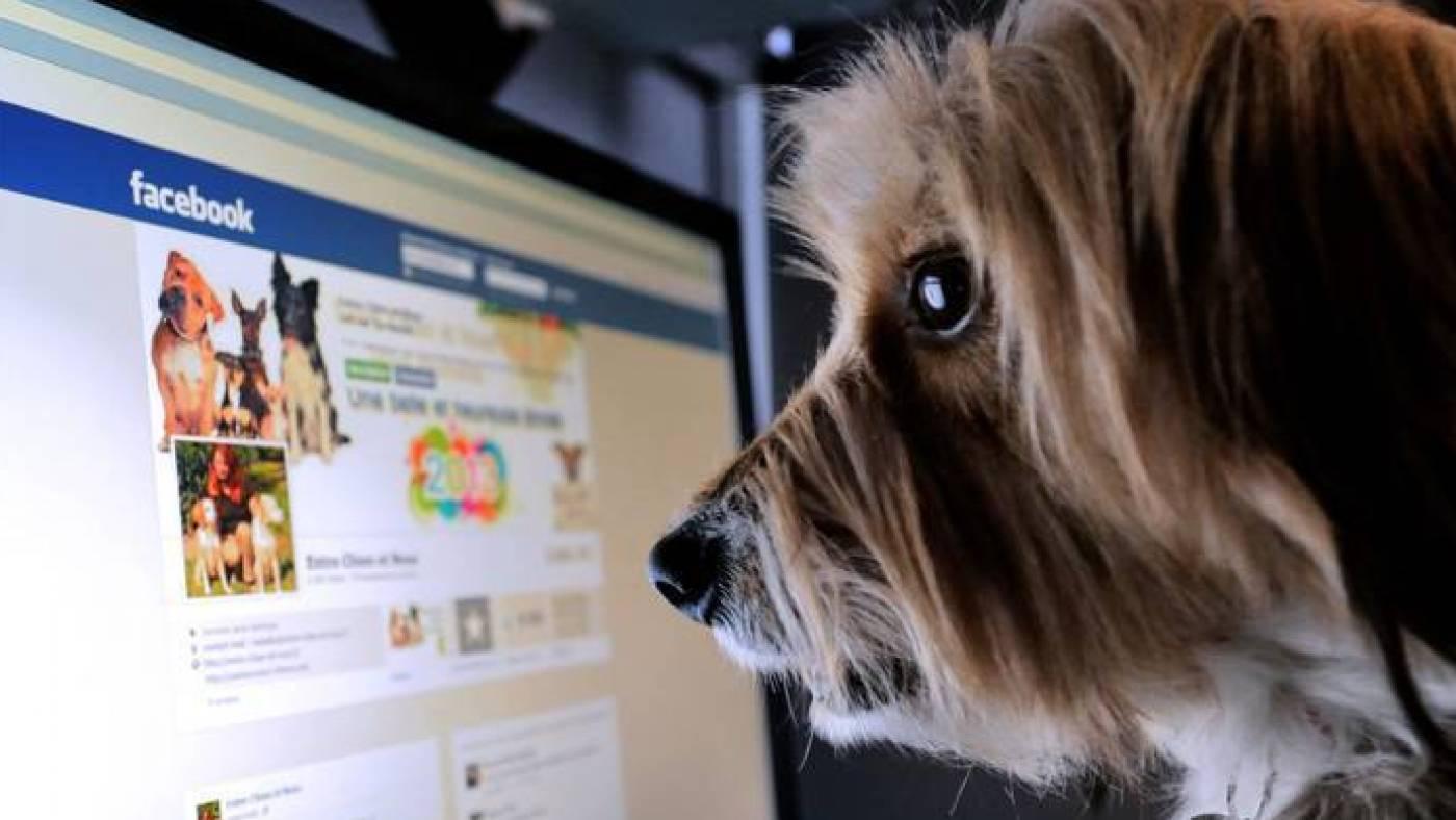 Влияют ли негативные комментарии на эффективность рекламы в Facebook? Тест на $1000